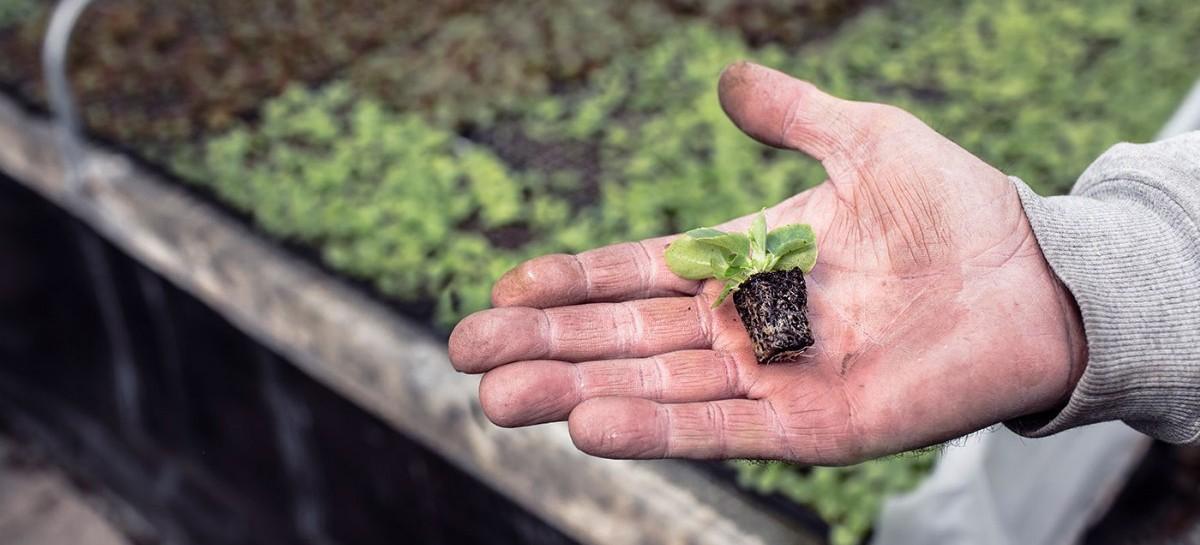 """Crearon un """"Banco de Insumos Agropecuarios"""" para el desarrollo de productores bonaerenses"""