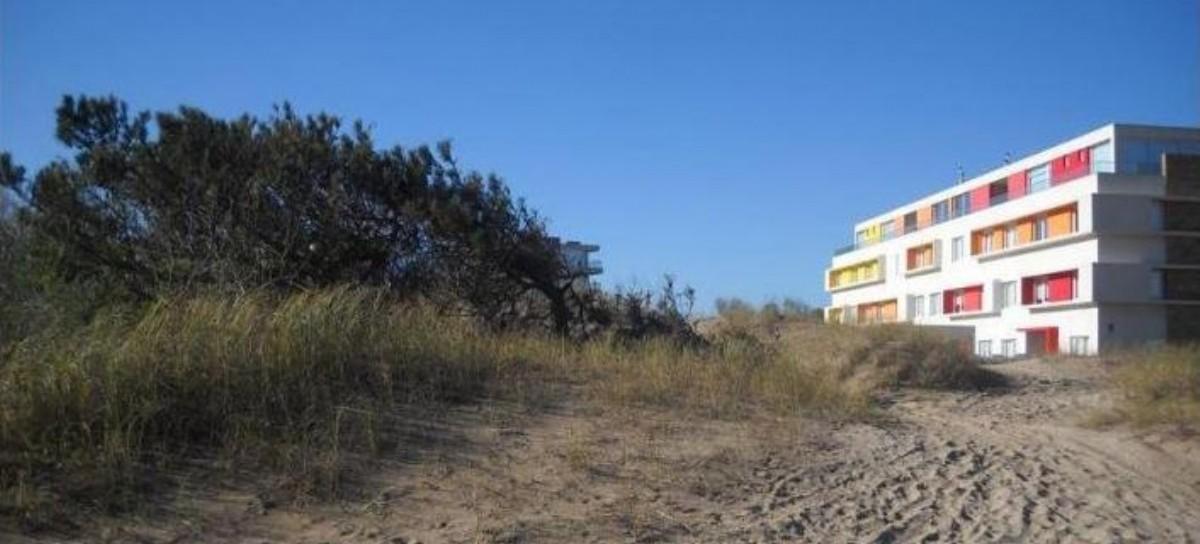 Las Dunas, en peligro: la UNLP busca preservar el arbolado urbano de la costa bonaerense