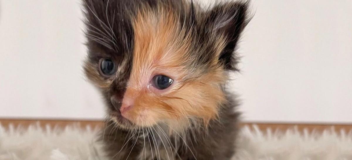 Una gata de rostro bicolor sorprendió a los habitantes de una casa