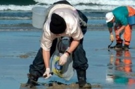 Para proteger la salud humana, prohíben la pesca de moluscos en amplio sector de la Costa bonaerense