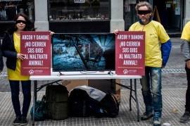Gallinas hacinadas: activistas le piden más ética a las empresas Arcor y Danone